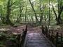 自然散歩村は山野草の宝庫
