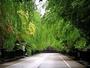 【角館】さわやかな風と緑のすがすがしい香りが癒してくれるでしょう。