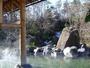 湯あみの島。四季を感じながらゆったり露天風呂。