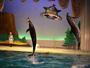 *【油壺マリンパーク】イルカ、アシカの愉快なショーが楽しめます。