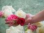 【大浴場】毎朝摘みたてのバラを浮かべた香り漂うバラ風呂です。